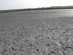 Oso Bay
