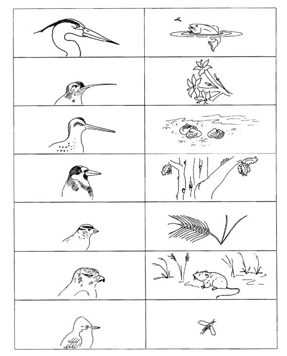 Birds Beaks And Food They Eat