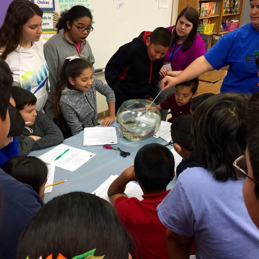 Elementary School National Curriculum: Elementary Teachers Engaged In Authentic Math