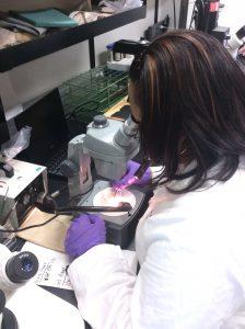 Figure 11 Identifying micro-plastics under a microscope